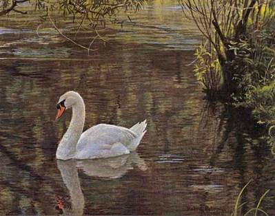 P Swan Ltd Sylvan Stream – Mute...