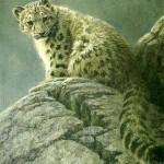 bateman-youngsnowleopard.jpg