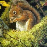 brenders-acrobatsmealthe-redsquirrel.jpg