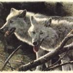 brenders-whitewolves.jpg