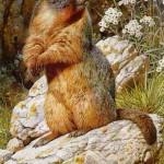 brenders-yellowbelliedmarmot.jpg