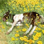 doolittle-springbreak.jpg