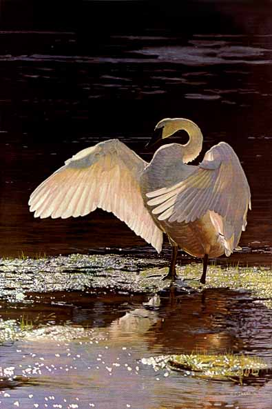P Swan Ltd Into the Light – Tru...