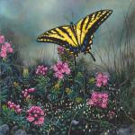 lyman-swallowtailbutterfly.jpg