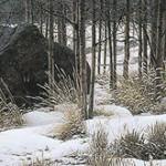 lyman-wintershadows.jpg