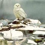 solberg-winterwhite.jpg